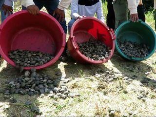 17,000 baby turtles were released in Peru
