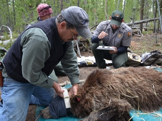 Tracking animals with high-tech tools