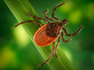 Early Lyme disease test comes with CDC warning