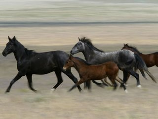 Committee nixes rule banning horse slaughter