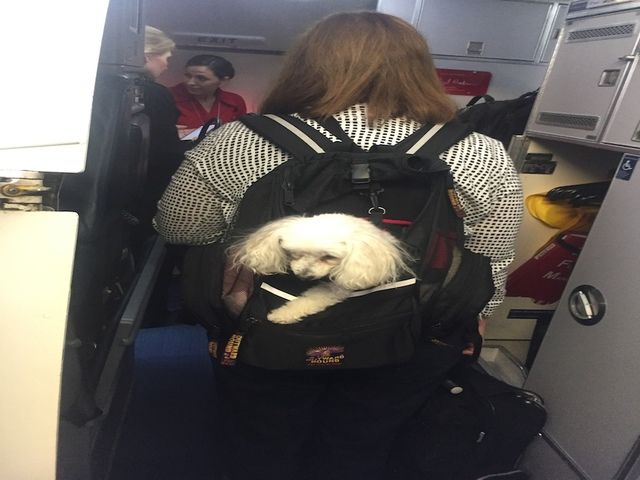 Denver  Fake Service Dogs