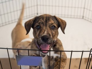 Ask the Expert: Animal fostering