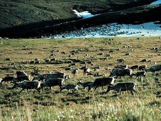US may OK drilling in National Wildlife Refuge