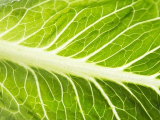 US officials say don't eat romaine lettuce