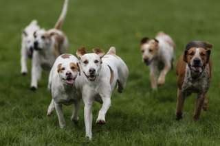 Dog food may be causing rise in heart disease